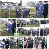 مراسم روز درختکاری در باغ نارنج لاهیجان برگزار شد