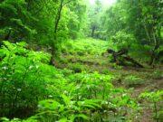 غارت جنگل های هیرکانی فتاتو خمام